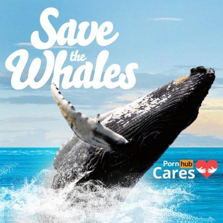 porn hub save the whale twitter via partecipactive
